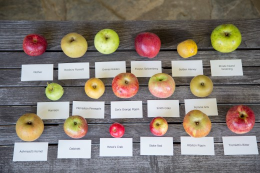 Apples-153